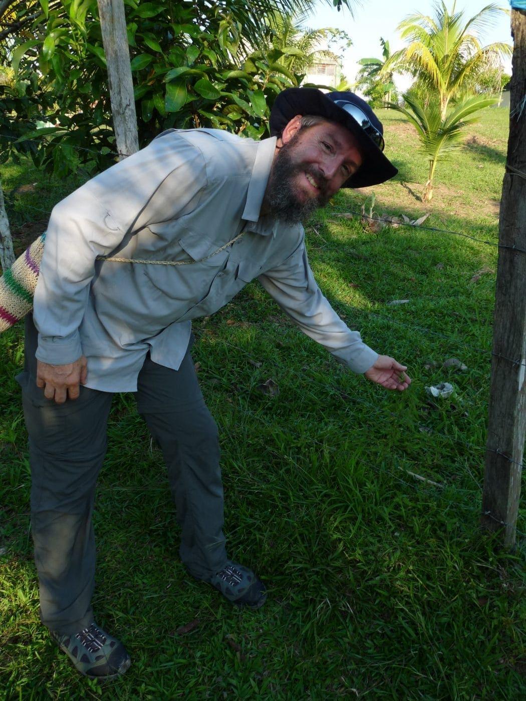 How Phyllanthus Niruri May Help You Fight Lyme Disease