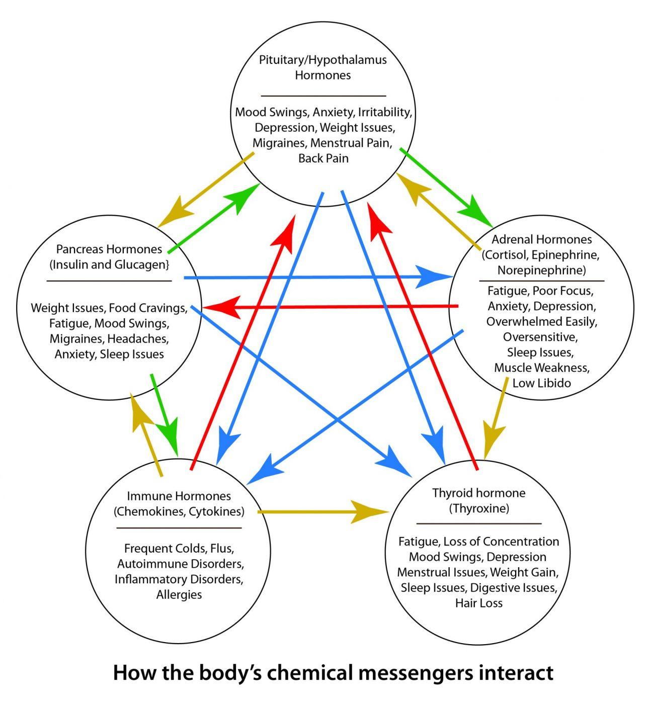 endocrine immune messaging endocrine system immunity