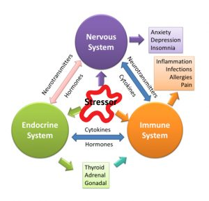 The endocrine system hormones and immunity part 2 of 3 linden endocrine immune messaging ccuart Image collections