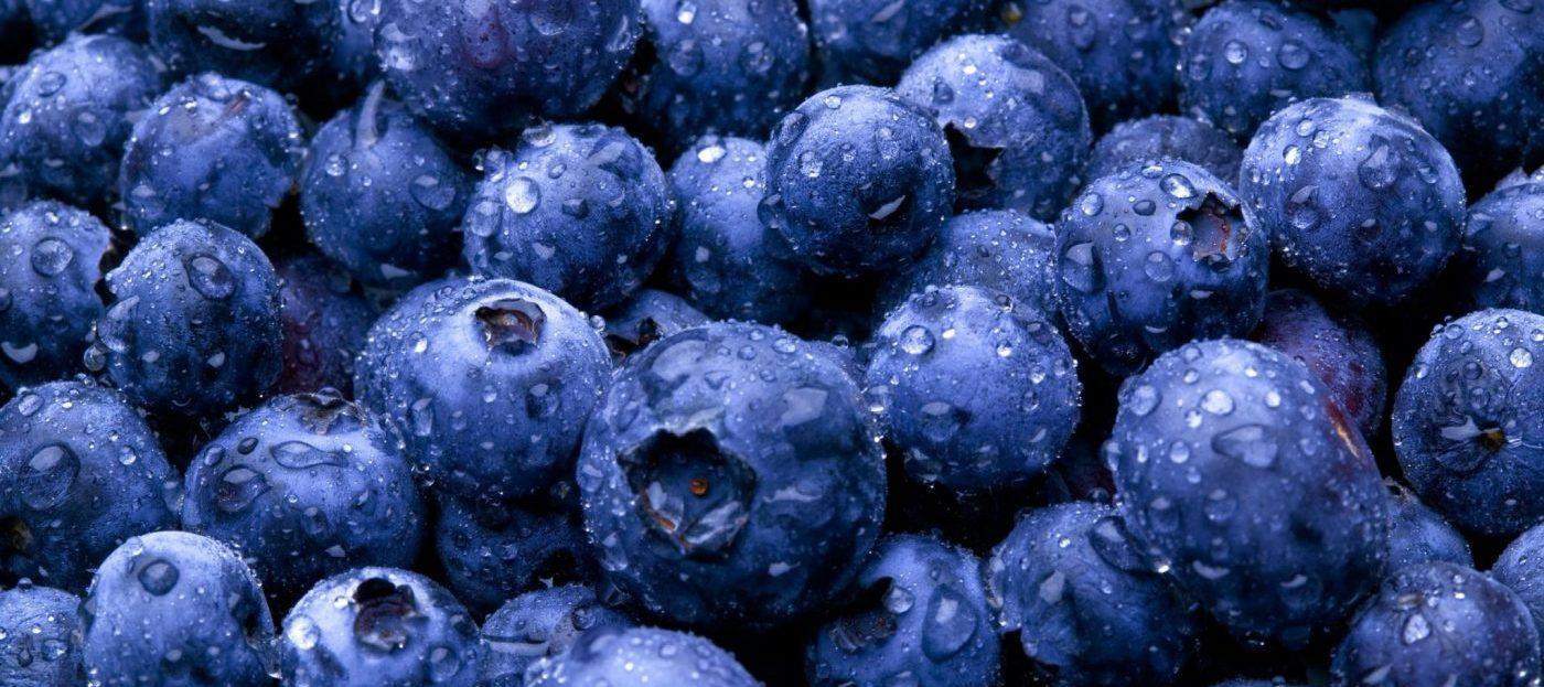 Vaccinium Therapeutic Uses - Bog Blueberry, Bilberry, Alpine Blueberry - Linden Botanicals (www.LindenBotanicals.com)