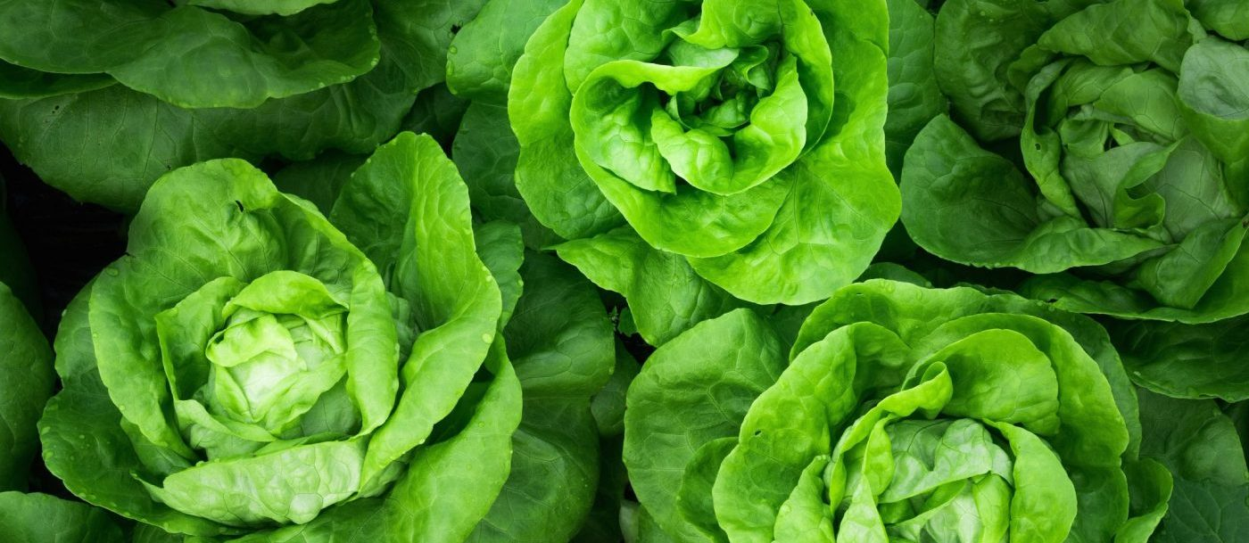 Want to Slow Down Cognitive Decline? Eat a Salad a Day. (Linden Botanicals, www.lindenbotanicals.com)